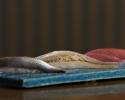 【握り寿司ランチ】白川