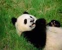 Pandacourse