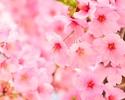 桜&いちご祭り「お花見ランチバイキング」