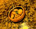 Delv Mushroom Oil Confit