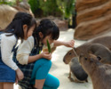 [Saturdays, Sundays, and holidays lunch] Kobe Animal Kingdom admission & Jukeien lunch set [Elementary school Children]
