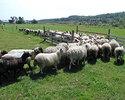 酒井さんの仔羊を使用した特別コース